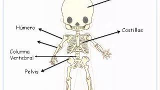 el cuerpo humano para niños de primaria - YouTube