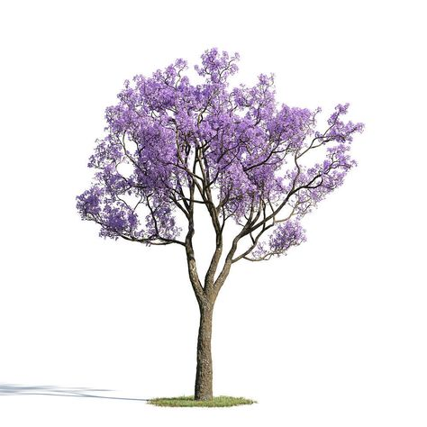 Jacaranda mimosifolia 33 am154 by Evermotion. Highly detailed 3d model of tree with all textures, shaders and materials, ready to use in your visualizations. model from:                                             Archmodels vol. 154                             Formats:                                 max                                 c4d                                 obj                                                                 -                                 simple object without t
