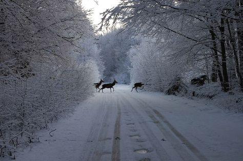 Winter in Poland.