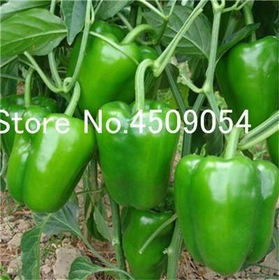 100 Pcs Hot Chili Seedsplants Carolina Reaper Organic Bonsai Vegetable Rainbow Bell Ghost Pepper Bonsa Pepper Plants Stuffed Green Peppers Growing Bell Peppers
