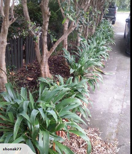nz native renga renga new garden planting plan pinterest native gardens gardens and planting - Native Garden Ideas Nz