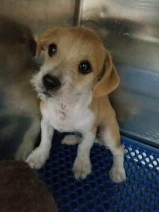 Update Current Status Is Unknown 35781731 Located In El Paso Tx