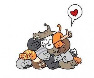 Pin En Cats 猫 Chats Gatos