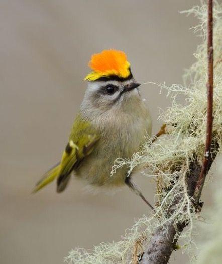 die 463 besten bilder zu hübsche vögel in 2020  hübsche