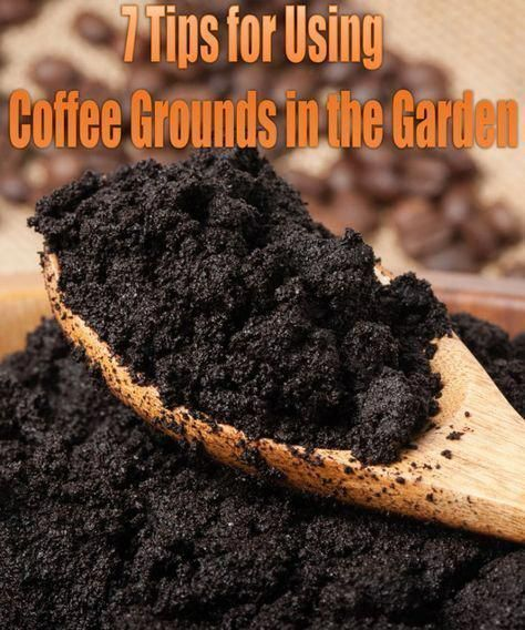 7 Ways To Use Coffee Grounds In The Grarden Uses For Coffee