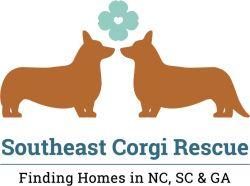 Adopt Corgi Rescue Adoption Foster Dog