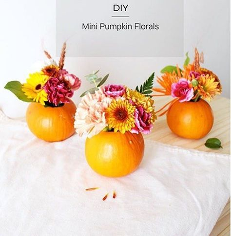 whiterocklake These pumpkin florals are...