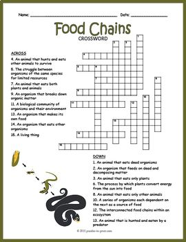 Ecosystem Activity Food Chain Crossword Puzzle Food Chain