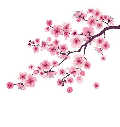 Pastel Color Cherry Blossom Vector Illustration Japan Sakura Branch Cherry Blossom Art Cherry Blossom Drawing Cherry Blossom Painting