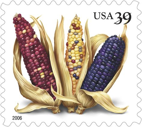 Corn had been cultivated in the Americas for centuries before the Europeans first arrived in the New World. Also known as maize or Indian corn, this abundant crop is a staple in American diets.