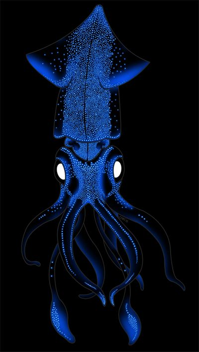 (Watasenia scintillans) Known as the sparkling enope squid or firefly squid. Beautiful Sea Creatures, Deep Sea Creatures, Deep Sea Animals, Underwater Creatures, Underwater Life, Octopus Art, Life Aquatic, Sea Monsters, Sea And Ocean