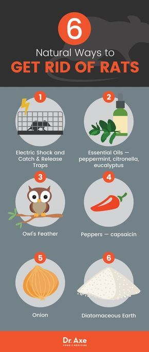 How To Get Rid Of Rats Naturally Dangers Of Rat Poison Dr Axe Getting Rid Of Rats Rat Poison Rodent Repellent