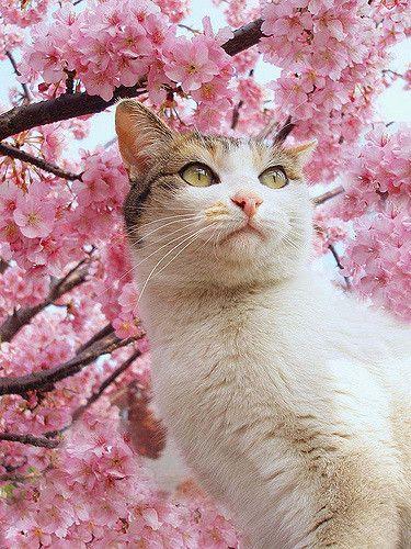 Drxgonfly Cats Pretty Cats Cute Cats