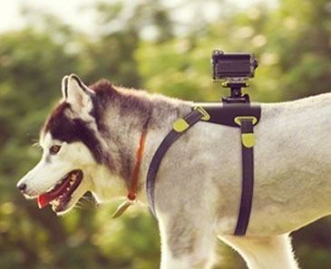 Sony Action Cam Dog Mount Chien Animaux Harnais
