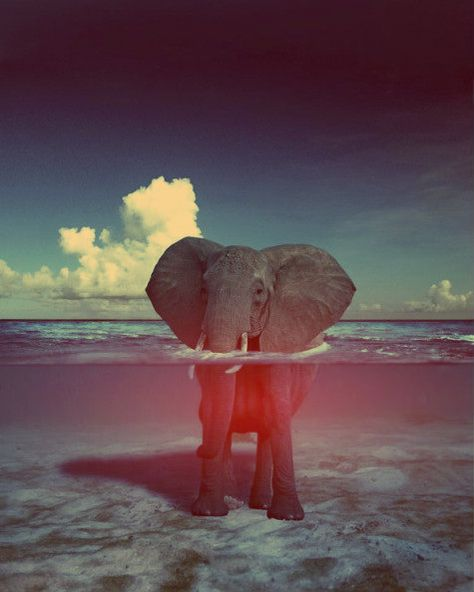Elephant in water, photography, nature