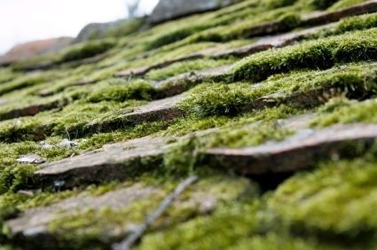 Preventing And Removing Moss From Your Roof Roof Moss