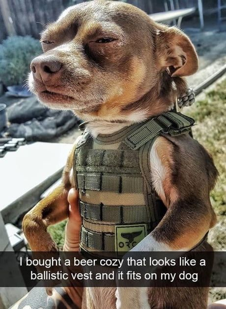 Thank you for your service. | Funny dog memes, Funny animals, Funny dogs