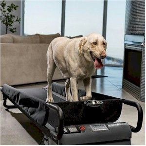When To Know If You Need A Dog Treadmill Dog Treadmill Dog
