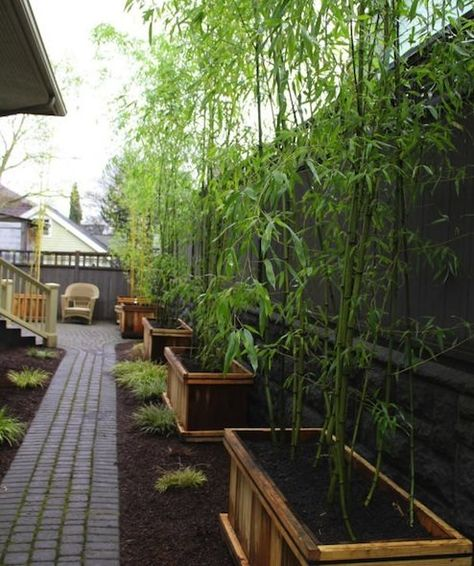 Here are five ideas to help you envision possibilities for landscaping with bamboo, a giant grass that's been trending in the U.S. for the last few years, especially in flooring.