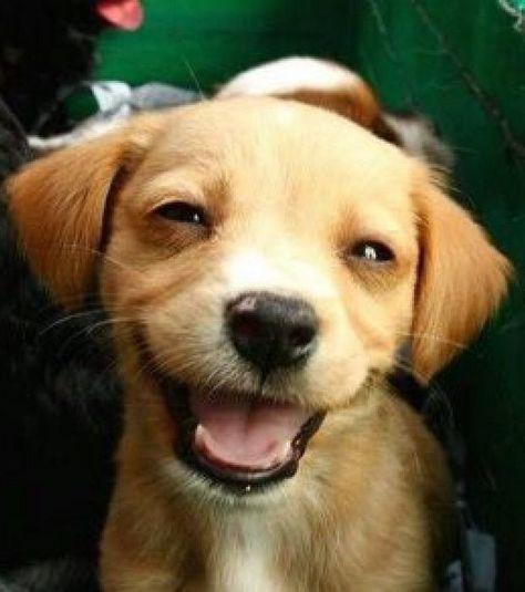 Photo : Si les petits chiens sont réputés pour être les plus vifs, ils peuvent aussi être très souriants