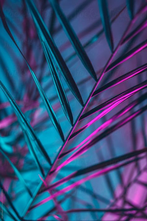 Modern palm tree lit with colorful fluorescent light indoors by Wizemark for Stocksy United; Exotic, colorful palm tree/leafs background; fluorescent colorful palm leaf background/texture; summer themed colorful tropical background; neon palm leaf pattern;