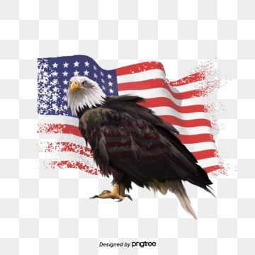 Hand Painted Elements Of American Flag National Flag National Bird Hand Painted Png Transparent Clipart Image And Psd File For Free Download National Flag American Flag Banner Flag Painting