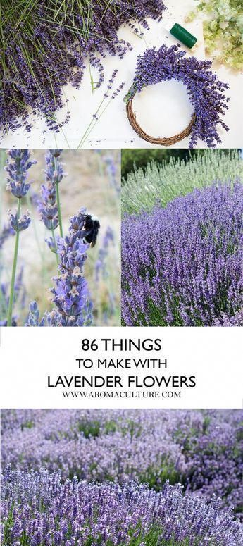 This Is Why My Husband Couldn T Find Me Lavender Plant Lavender Crafts Lavender Flowers