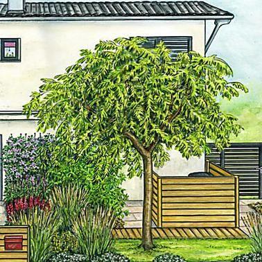 Die Schonsten Baume Fur Kleine Garten Baum Vorgarten Garten Gartnern Auf Kleinem Raum