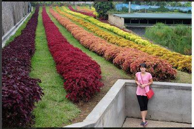 Harga Tiket Masuk Dan Rute Lokasi Rainbow Garden Lembang Bandung Bunga Taman