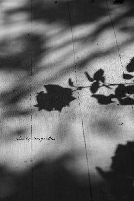 幻 影 | Berry's Bird | 黒バラ, 壁紙 薔薇, 薔薇イラスト