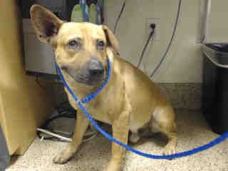 Www Petharbor Com Animal Search Adoptable Animal Shelter Animals Puppies