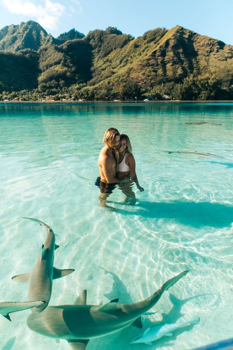 hbgoodie.com TAHITI, MOOREA French Polynesia Travel Blog / #waterfalls #beach #humpbacks #whales swim with sharks rays and whales, hike through the jungle, swim in the clearest water. What to do, where to stay, what to eat, in Tahiti and other travel tips. #sharks #couple #honeymoon