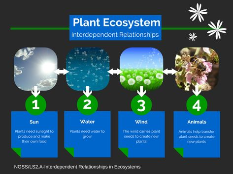 TOUCH this image: Plant Ecosystem by Christi Collins