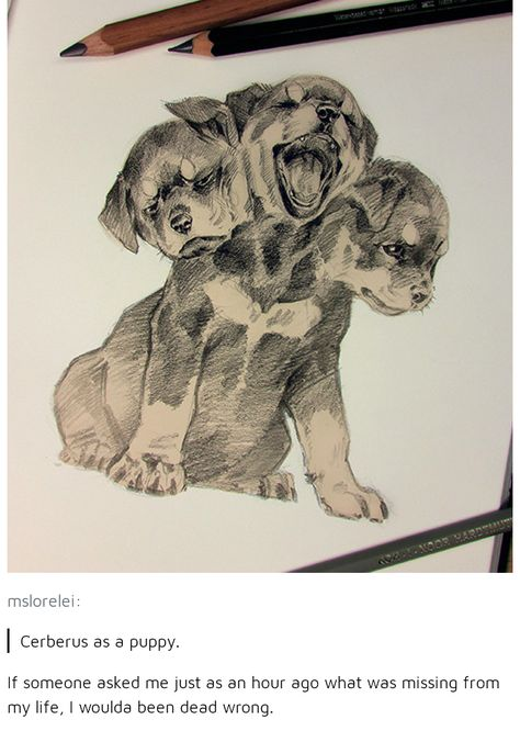 The funny thing is, this could be Fluffy from Harry Potter or Cerberus from Percy Jackson. Drawn Art, Arte Sketchbook, Hades And Persephone, Percy Jackson Fandom, Greek Gods, Fantastic Beasts, Art Drawings, Funny Drawings, Drawing Meme