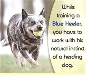 Dog Training K 9 Dog Training Sarasota Dog Training Tricks And