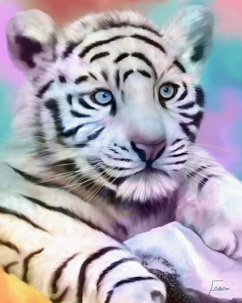White Tiger For Sale : white, tiger, White, Tiger, Pengetahuan