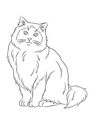 Ausmalbild Ragdoll Katze Zum Ausmalen Ausmalbilder Malvorlagen Katze Ausmalbilderkatze Ausmalbilder Katzen Katze Zum Ausmalen Malvorlagen Tiere
