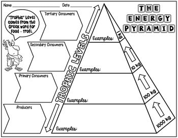 Energy Pyramid Science Doodle Notes Interactive Notebook Energy Pyramid Doodle Notes Science Science Doodles