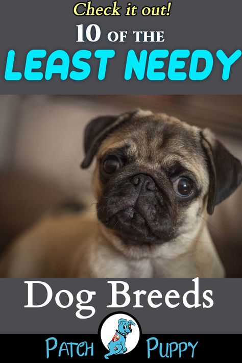 Looking For Low Maintenance Dogs For Apartments Medium Sized Apartment Dogs Check Out These 10 Leas In 2020 Dog Breeds Low Maintenance Dog Breeds Low Maintenance Pets