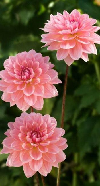 Flower 綺麗な花 美しい花 鮮花