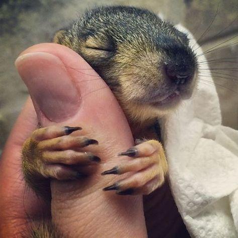 baby squirrel hug