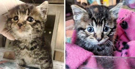 Stray Kitten So Happy When She Is Finally Off The Streets And Has Her Life Turned Around Tabby Kitten Tabby Pretty Cats
