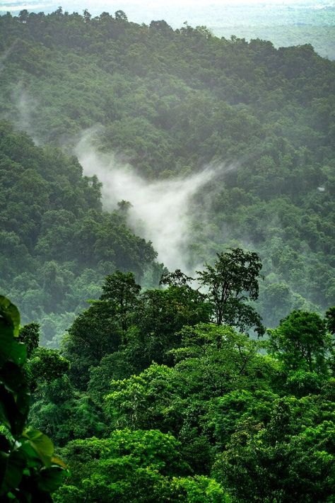 A lush green rainforest! Help us restore worldwide forests by installing TreeClicks and planting trees for free when shopping. Jungle Images, Jungle Pictures, Nature Pictures, Pictures Images, Beautiful Pictures, Amazon Rainforest Deforestation, Rainforest Pictures, Places To Travel, Places To Go