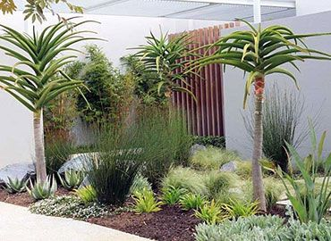 Petro Landscaping Cape Town South Africa Garden Ideas South