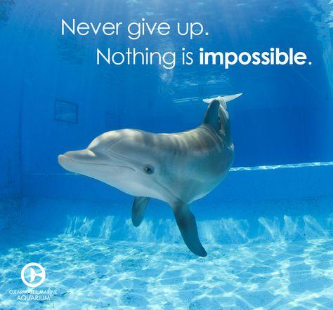 115 best Marine aquarium images on Pinterest Dolphin tale - marine biologist job description