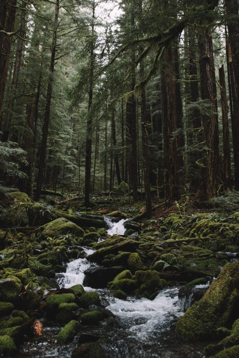 Superb Nature - faliciateodosio: On the way to lovers lane . Beautiful World, Beautiful Places, Beautiful Forest, Landscape Photography, Nature Photography, Cityscape Photography, Slytherin Aesthetic, Nature Aesthetic, Beautiful Landscapes