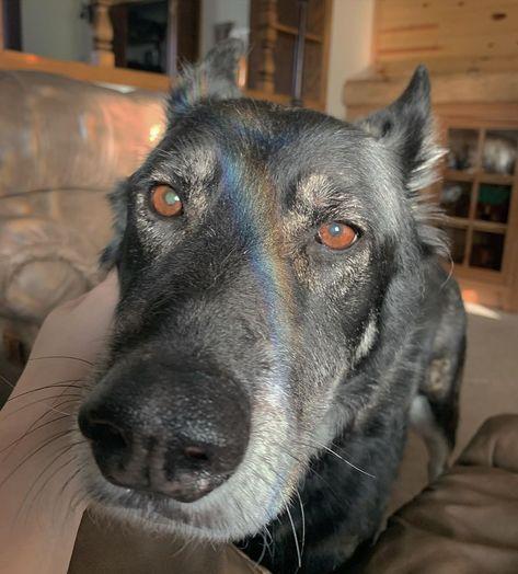 She may be old but she still got the energy of a pup  ... #dog #dogsofinstagram #dogs #puppy #dogstagram #instadog #pet #doglover #love #dogoftheday #cute #doglovers #instagram #pets #of #puppylove #doggo #puppies #cat #doglife #puppiesofinstagram #ilovemydog #dogsofinsta #animals #hund #doggy #petstagram #k #animal