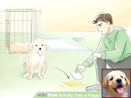 Dog Behavior Muzzle Punch And Clicker Training Dog To Shake Dog