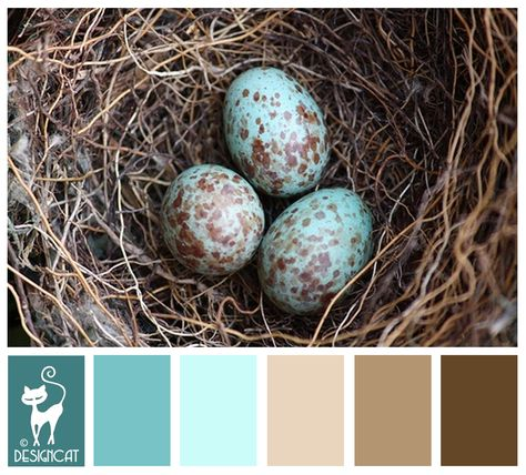 Magpie eggs - Teal, Blue, tiffany, pastel, Beige, Brown, Coffee - Designcat Colour Inspiration Board