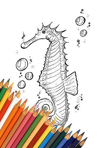 Sea Horse Coloring Page Coloring Page Sea Horse Printable
